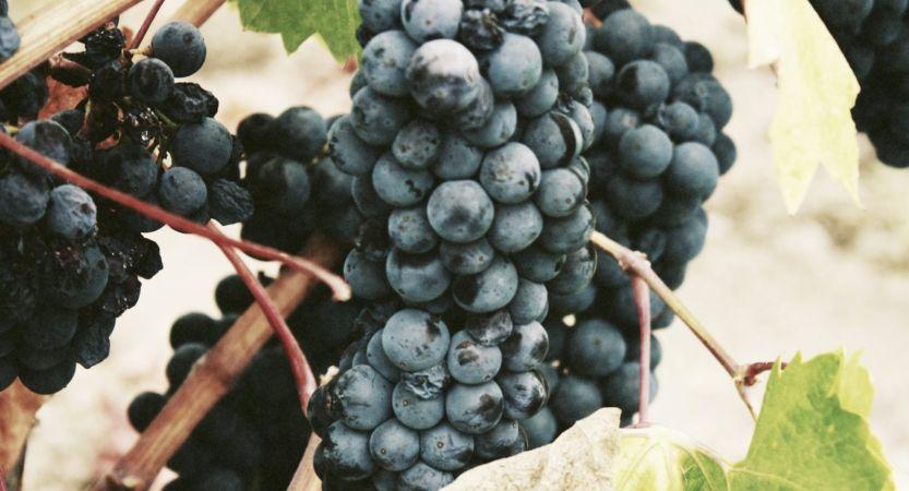 Un Blog sur l'actualité du Vin & du Numérique