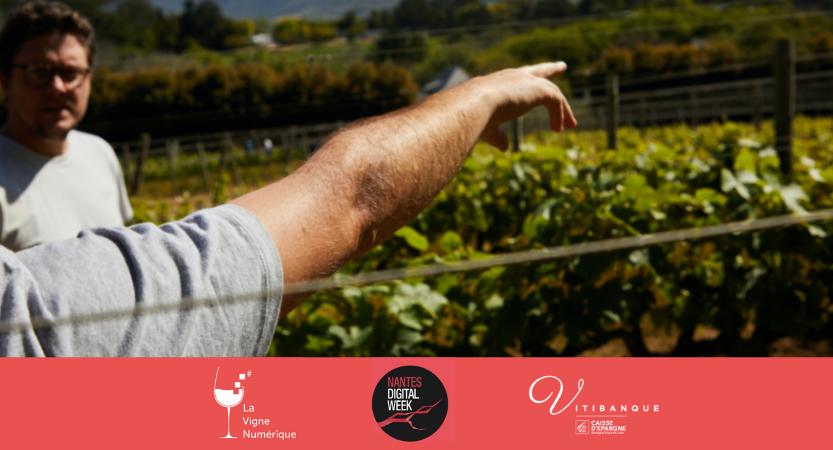 «La filière viticole ligérienne en transition» – webinaire à la Nantes Digital Week