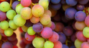 Le renouveau de La Vigne Numérique !